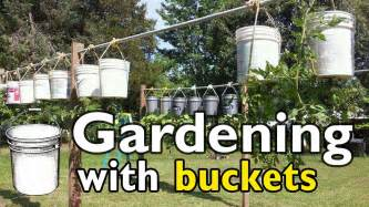 gardening with 5 gallon buckets youtube