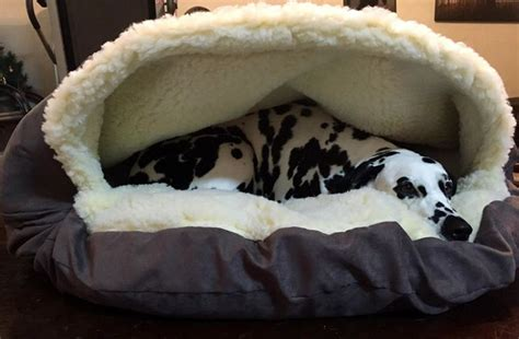 cave dog bed snoozer luxury cozy cave dog bed care 4 dogs on the go