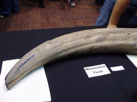 mastadon tusk related keywords suggestions for mastodon tusk