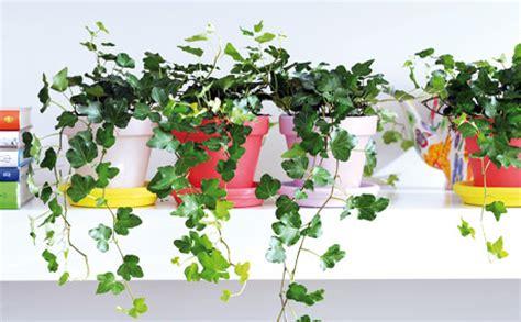 Zimmerpflanzen Die Wenig Licht Benötigen by Pflanze Die Kein Licht Braucht Awesome Stunning Die