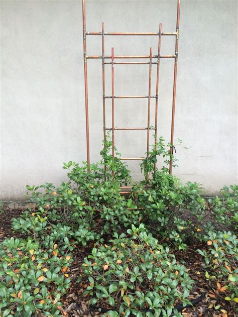 Copper Pipe Trellis 42 best images about garden copper pipe trellis on gardens copper and crutches