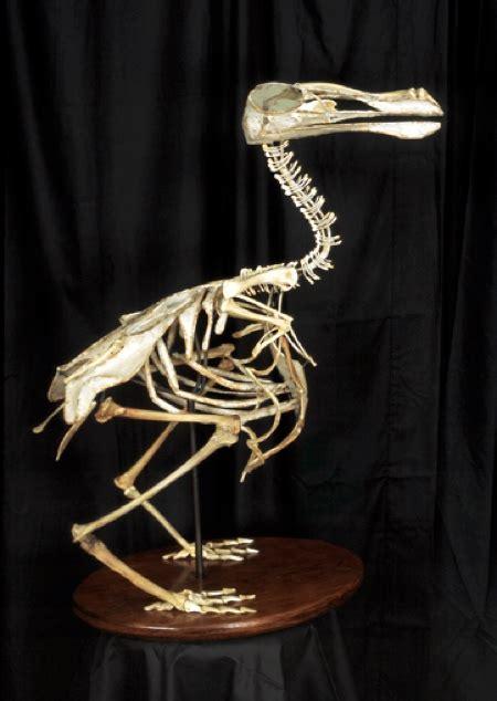 Exti T Birds