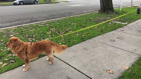 best retractable leash the best retractable leash in 2017 the top 5 leashes compared superwhiskers