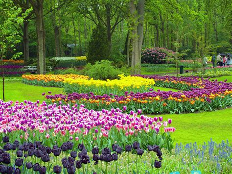 photos of gardens the most colourful day trip from amsterdam keukenhof gardens
