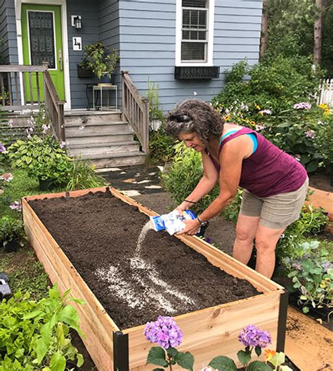 guide  raised garden beds plans timing tending