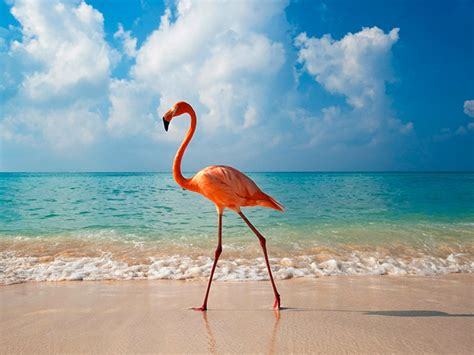 flamingo bay wallpaper eagles bay enriquillo lake best incoming partners in