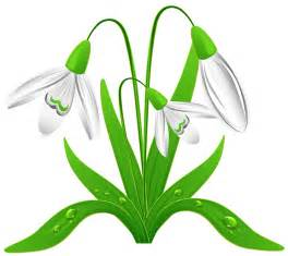 Spring snowdrops png clipart picture clipart best clipart best