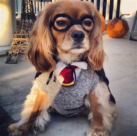 harry potter puppy harry potter by a image 2198730 by saaabrina on favim