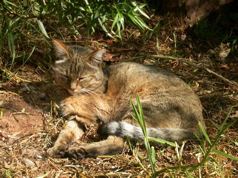 myth or fact do outdoor cats go away to die the pet