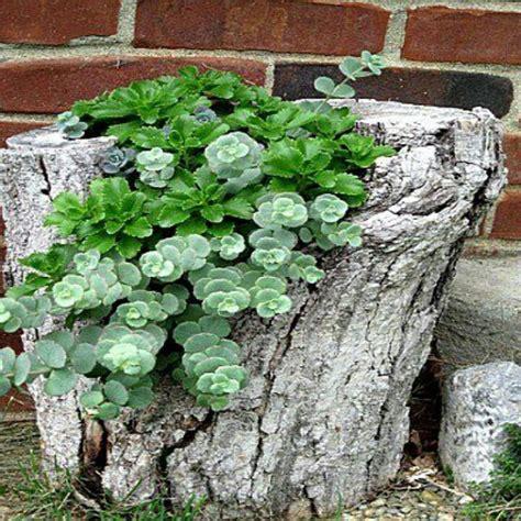 tree stump flower garden ideas pinterest trees