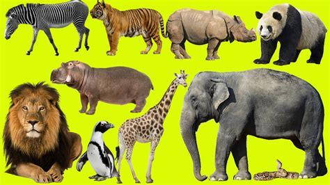 zoo animals at the zoo animals at the zoo learn safari