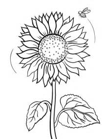 sunflower coloring pages printable sunflower coloring pages coloring me
