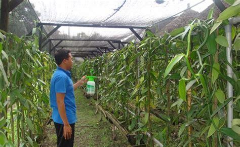 Nature Stek Tanaman paket budidaya panili organik nasa nasa official