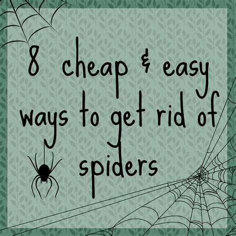 how to keep spiders out of basement easiest and fastest way to get rid of mice how to get rid