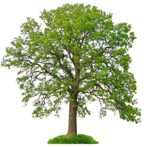 99 Fakta Unik Tentang Tumbuhan ilmu terapan fakta unik tentang tumbuhan