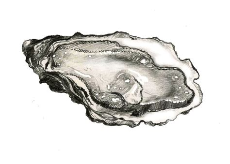 kd 151 tattoo pen oyster illustration oyster roast pinterest charcoal