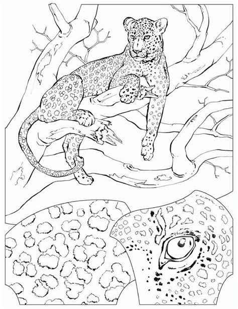 Realistic Cheetah Coloring Pages by Cheetah Coloring Pages 360coloringpages