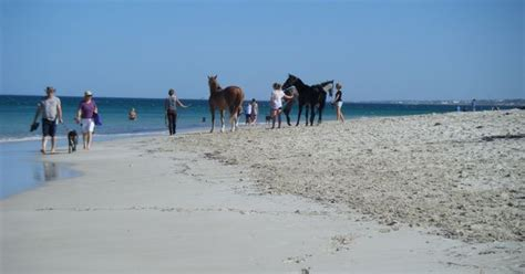 boat harbour dog beach i love to take visitors or just toby to the horse and