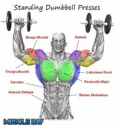 Shoulder exercises standing two arm dumbbell presses muscle day