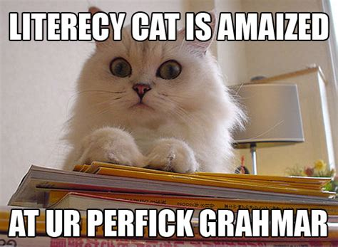 Lol Cat Meme - lolcat literacy word and image
