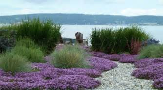 thymus grass and gravel garden pinterest gardens beautiful and front yards