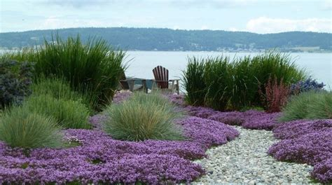 Coastal Landscaping Ideas Thymus Grass And Gravel Garden Pinterest Gardens Beautiful And Front Yards