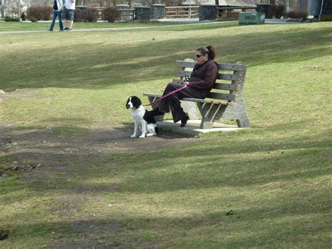 dog breeding bench english springer spaniel dog dog breeding info dog