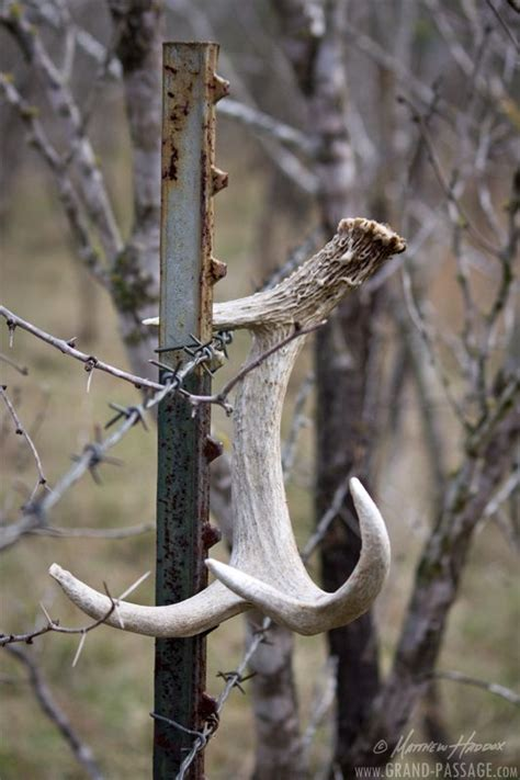 how to a to hunt shed antlers shed antler accessories