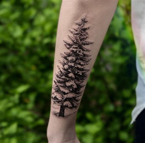 evergreen tree tattoo 30 refreshing evergreen tree designs amazing
