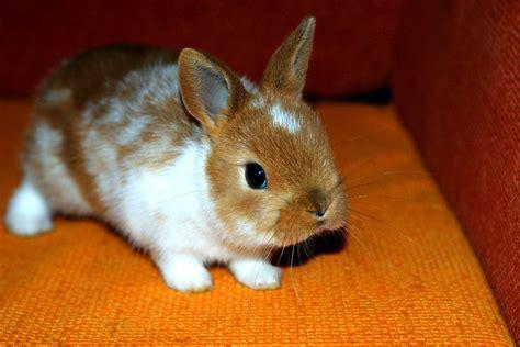 best bunny free photo bunny decorative home animal free image
