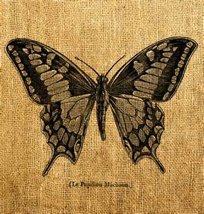 antique butterfly vintage butterfly digital image and print