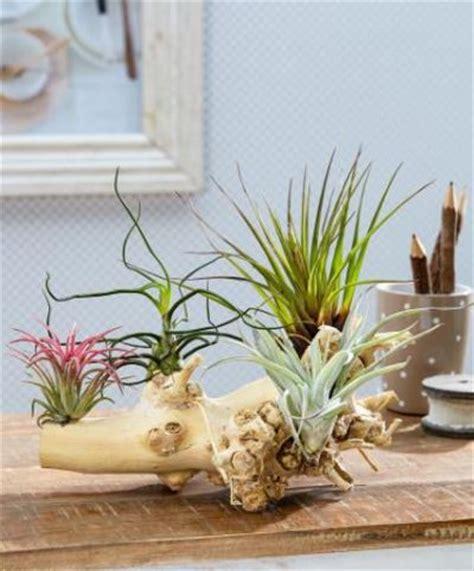 garten bakker bakker pflanzen bakker plantvital mehrj hrige pflanzen