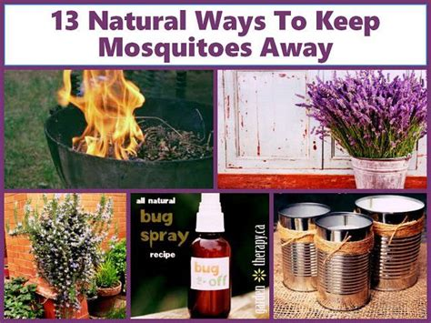 scents to keep mosquitoes away 5052 best images about gardening landscaping i on landscaping traditional