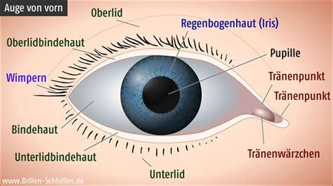 Beschriftung Des Auges by Die Regenbogenhaut Iris Auge