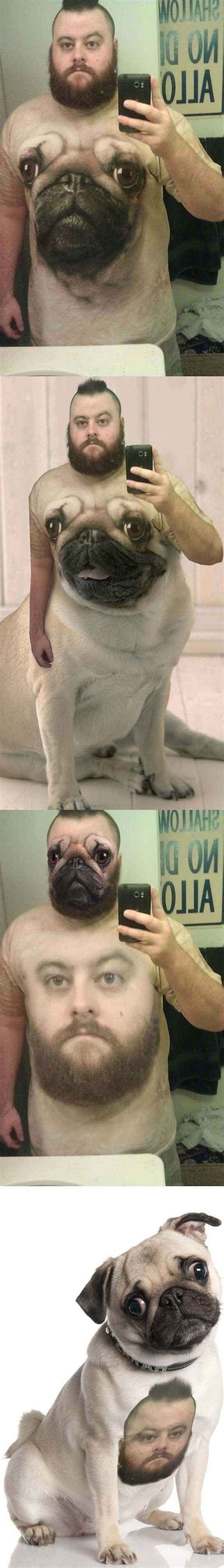 pug selfie 17 best images about on your meme name search and tina fey