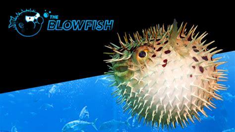 dive  pokers  buy   blowfish tournaments