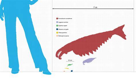 imagenes html size the invertebrate the super predator anomalocaris of the