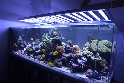 Eclairage Led Aquarium Recifal by Galeries Et Res Eclairages A Led Pour Aquariums Photo
