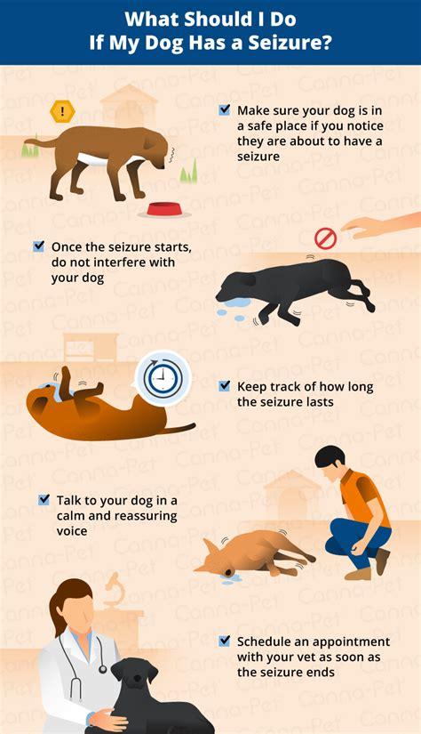 how do dogs last how do seizures last canna pet