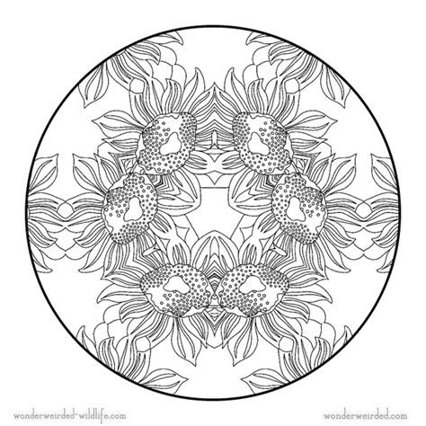 celtic wildlife colouring book a celtic themed take on nature filled with original images composed of celtic knots swirls and borders in a unique graphical style books sunflower mandala 5 free printable flower mandala coloring
