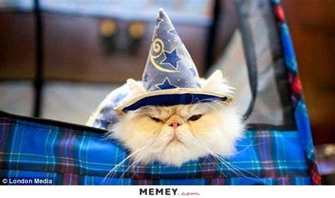 wizard cat costume memes costume pictures memey