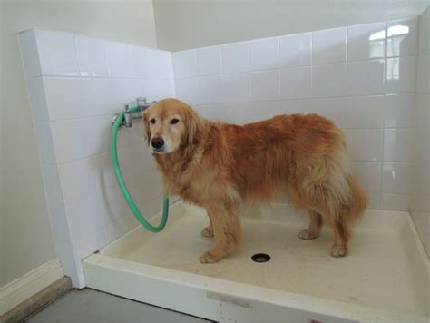 puppy shower best 25 washing station ideas on wash pet rooms and traditional