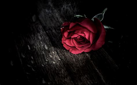 black rose themes gothic rose hd wallpapers 08819 baltana