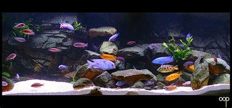 aquarium design for cichlids malawi cichlids interesting rock layout aquarium