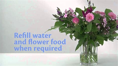 flower food packets how to use chrysal flower food packets youtube