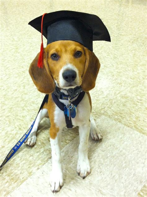 puppy graduation graduation puppy www pixshark images galleries with a bite