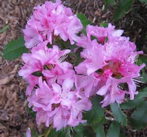state flower i o u sex washington state flower