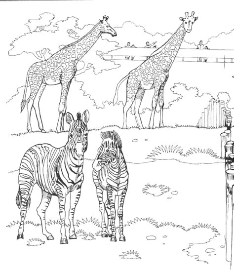 zoo coloring pages for adults zoo coloring pages for kids coloringpagesabc com