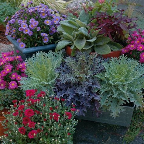 fall container gardens fall plants for container gardening gardening