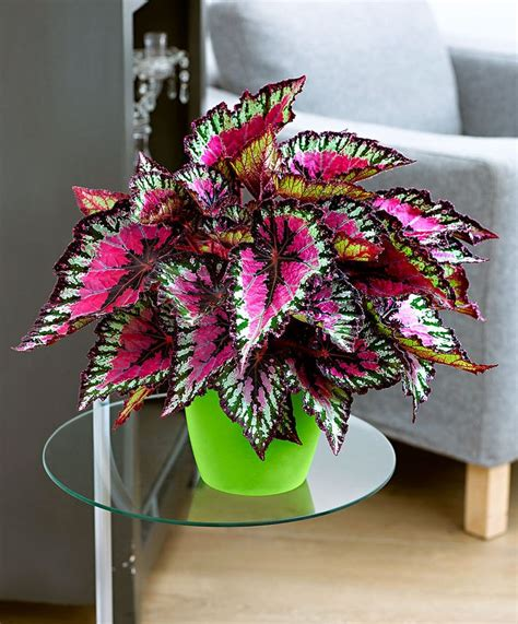 unique indoor plants design for indoor flowering plants ideas 21100